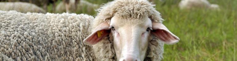 Отглеждане на домашни животни по европейски стандарти